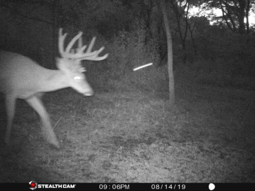 trail camera bucks in kentucky at north fork outfitters
